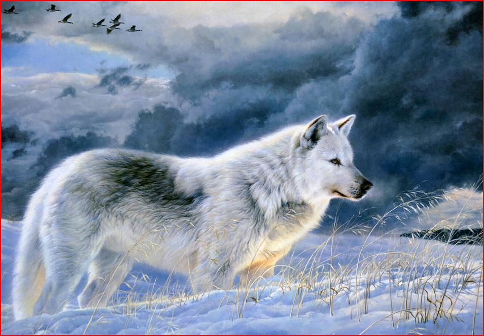 Обои на рабочий стол одинокий волк