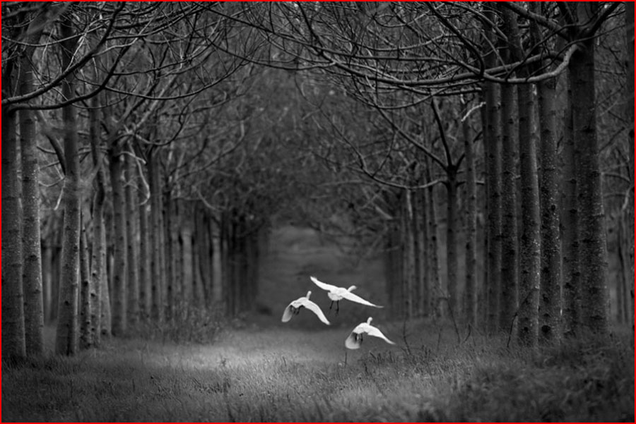 Работы фотографа Шломи Ниссима  (гей блюсик 10339)
