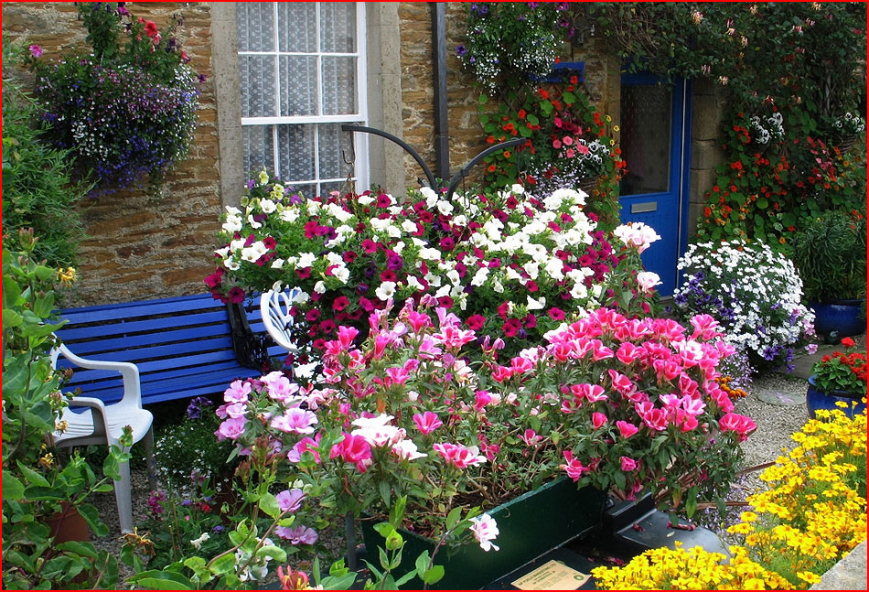 Цветники возле дома!. обсуждение на liveinternet - российски.