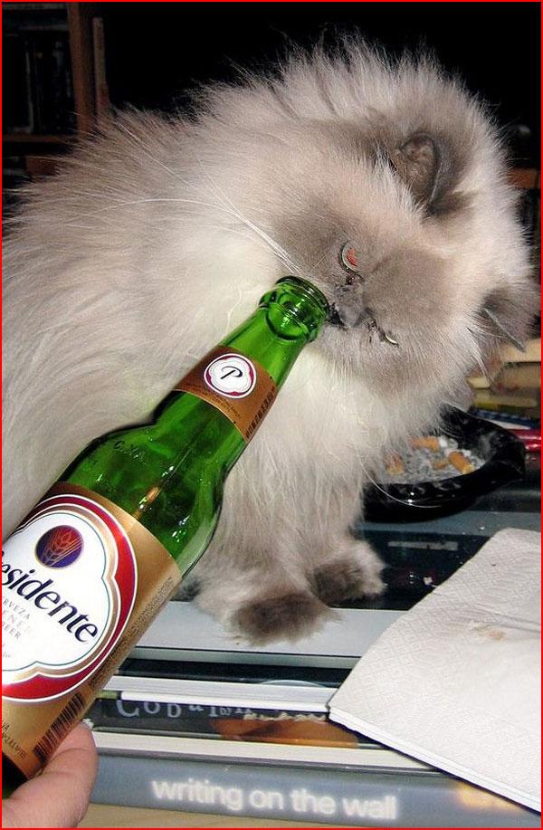 Коты пьяницы  (гей блюсик 10479)