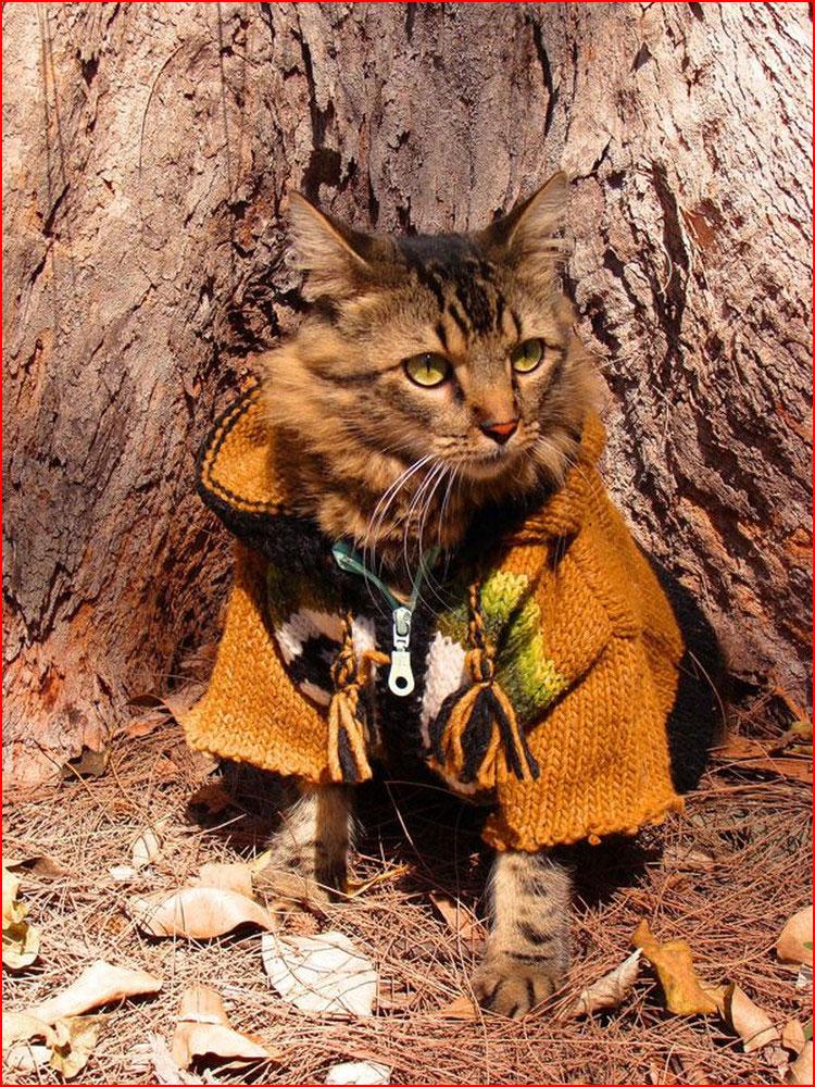 Кот-модель на фотографиях Джоан Бионди  (гей блюсик 10799)