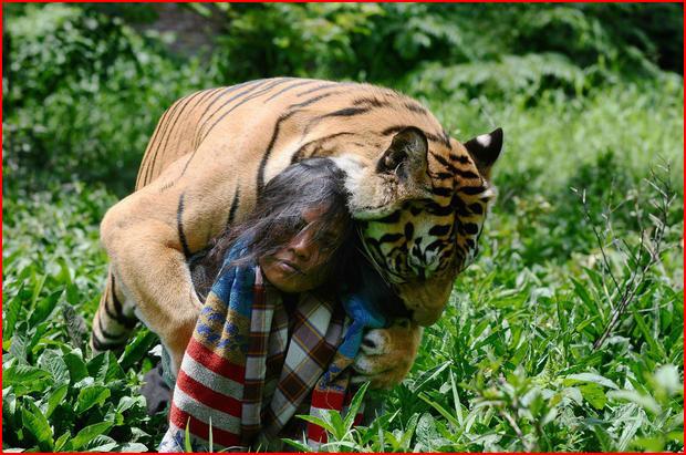Мой лучший друг – тигр  (гей блюсик 11052)