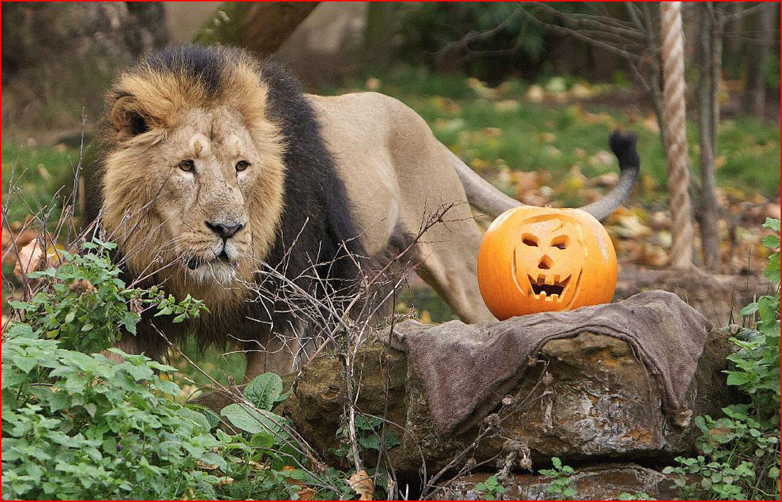 Хеллоуин у животных  (гей блюсик 11303)