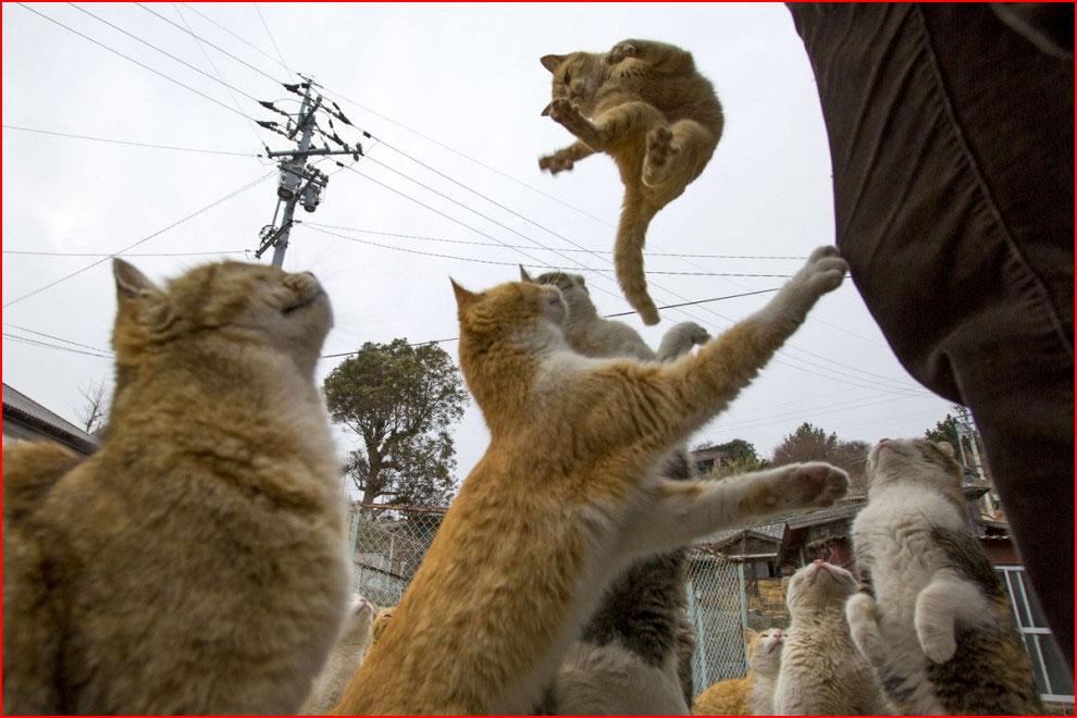 Остров кошек  (гей блюсик 11795)