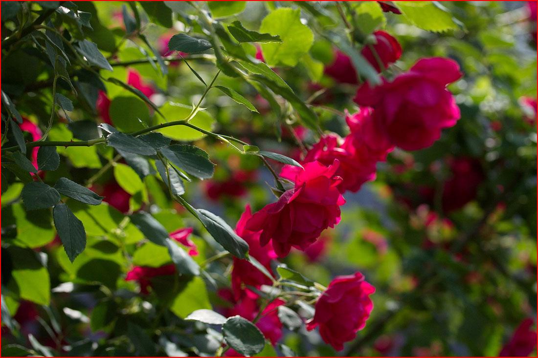 Краски лета  (гей блюсик 12151)