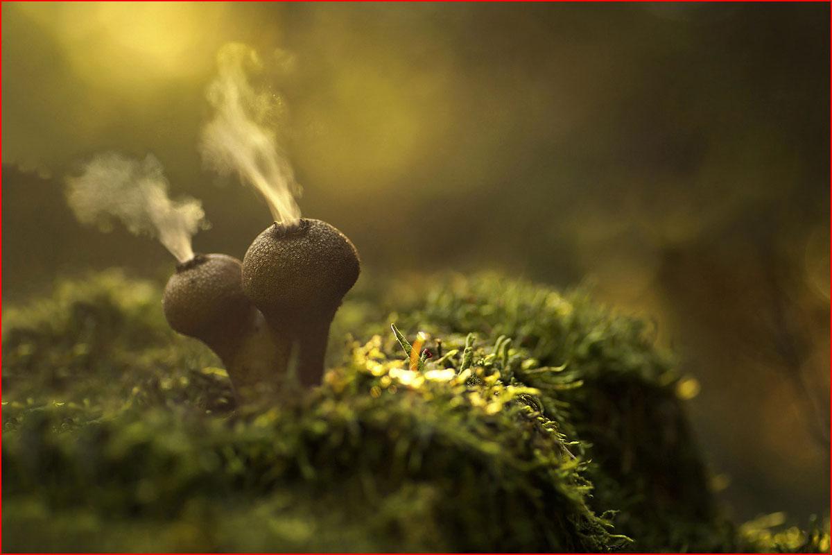 Светящиеся грибы  (гей блюсик 13691)