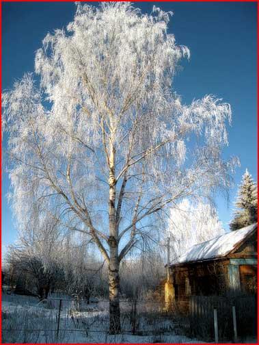 Крещенские морозы в Суздале  (гей блюсик 1403)