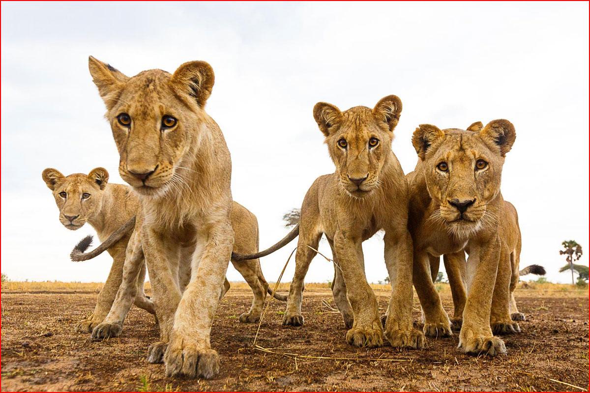 Самые интересные (по мнению читателей) фотографии, конкурса National Geographic  (гей блюсик 14051)