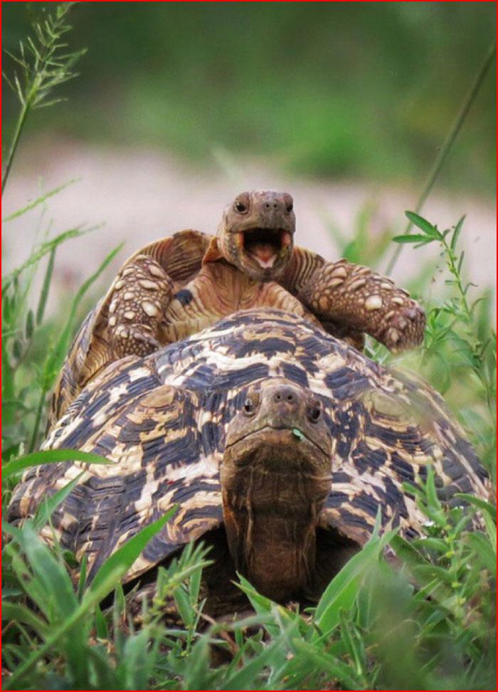 Необычный конкурс Comedy Wildlife Photography Awards 2016  (гей блюсик 14135)