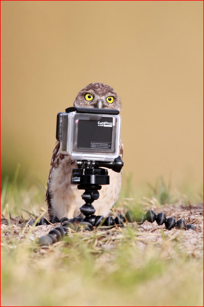 Необычный конкурс Comedy Wildlife Photography Awards 2016 