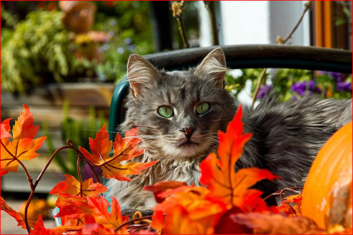 Осень и котэ  (гей блюсик 14180)