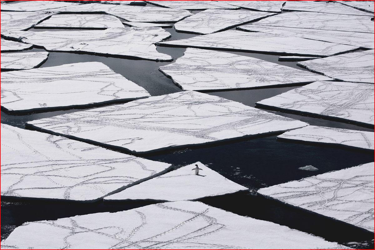 Самый большой заповедник в Антарктике  (гей блюсик 14283)
