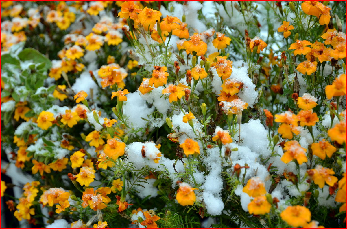 Первый снег  (гей блюсик 14299)