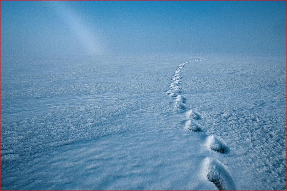 Ледяная красота Пола Никлена  (гей блюсик 14491)