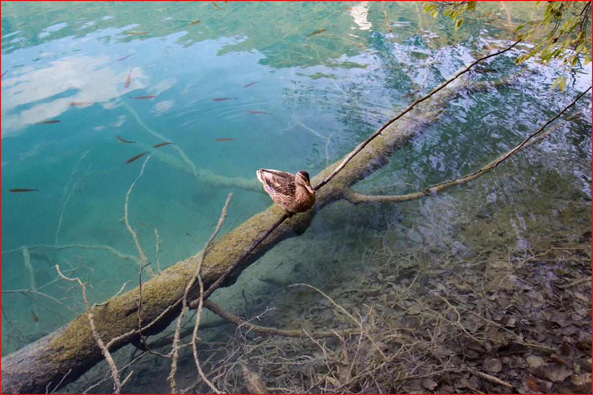 Плитвицкие озера  (гей блюсик 14787)