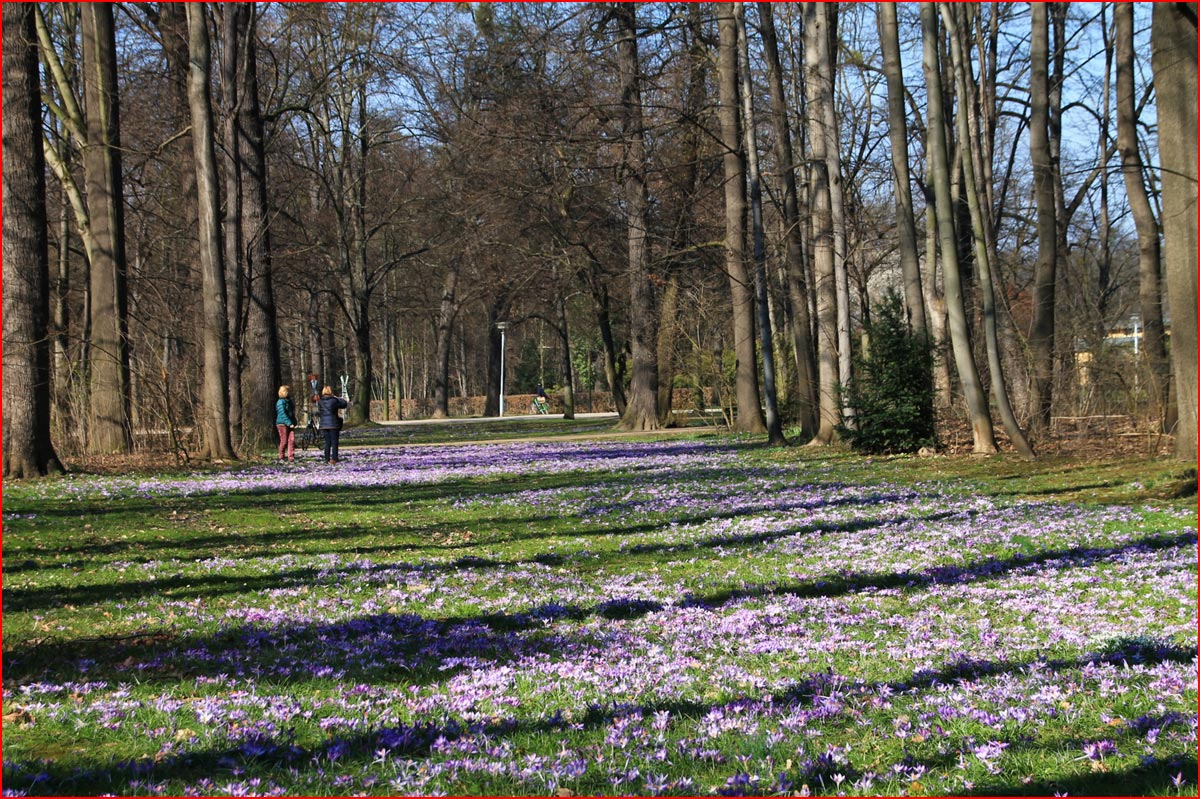 В Дрезден пришла весна  (гей блюсик 14823)