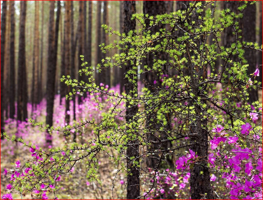 По лесным тропинкам  (гей блюсик 15023)