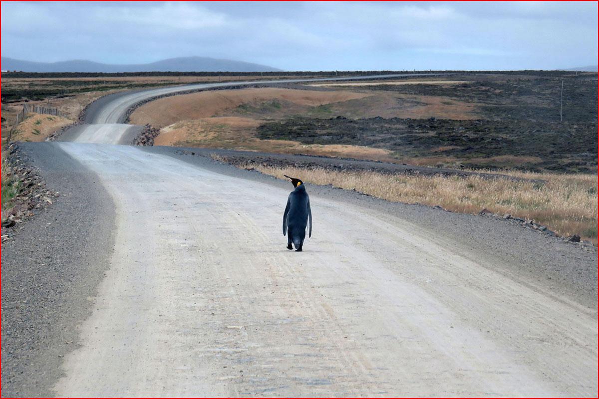 """Фото дня журнала """"Вокруг света""""  (гей блюсик 15027)"""