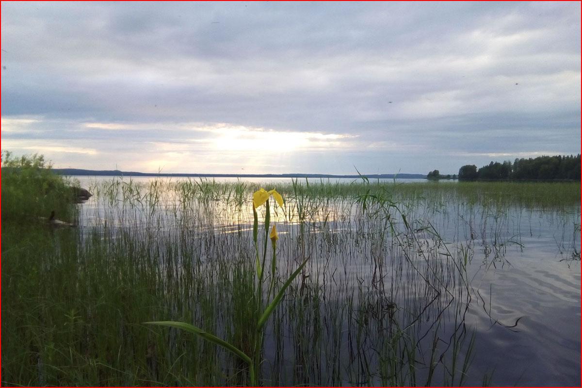 По реке приключений  (гей блюсик 15103)