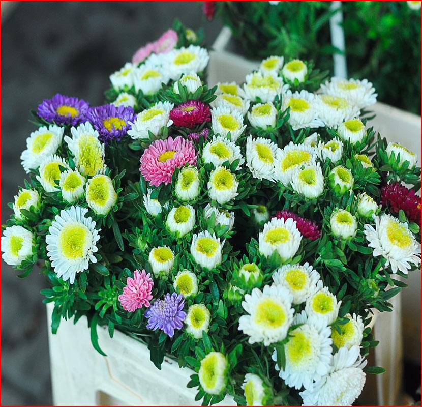 Цветочный маркет Кёльна. Фотозарисовка