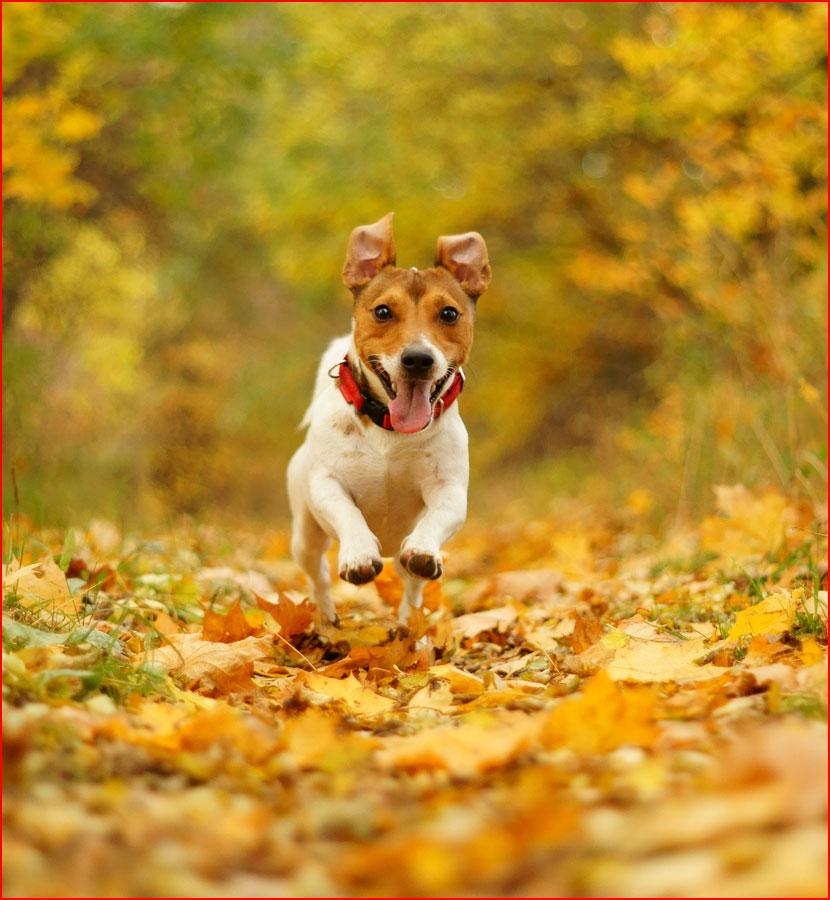 Осенняя фотозарисовка  (гей блюсик 15515)