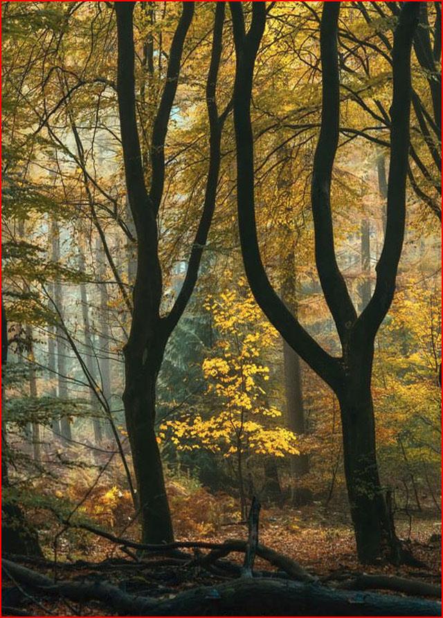Волшебные пейзажи голландского фотографа Ларса Ван де Гура  (гей блюсик 15535)