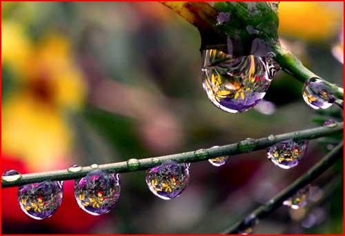 Капли на цветах  (гей блюсик 1555)