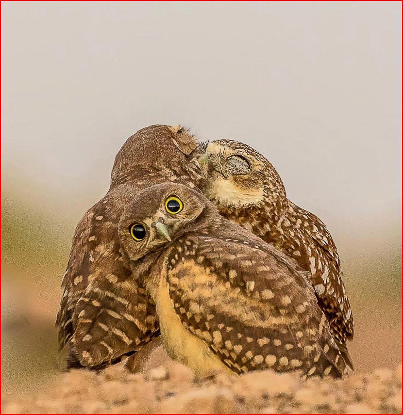 Весёлый фотоконкурс Comedy Wildlife Photography Awards 2017  (гей блюсик 15715)