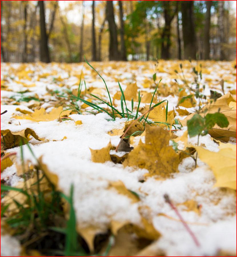 Солнце и первый снег на Воробьёвых  (гей блюсик 15723)