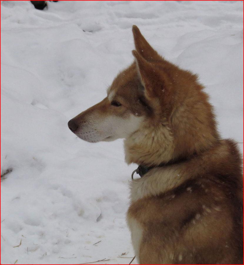 Зима. Байкал. Листвянка  (гей блюсик 15811)