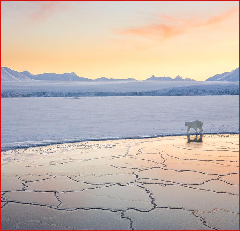 Конкурс дикой природы Wildlife Photographer of the Year  (гей блюсик 15959)