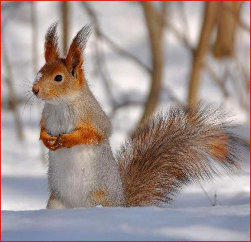 Животные зимой  (гей блюсик 16095)