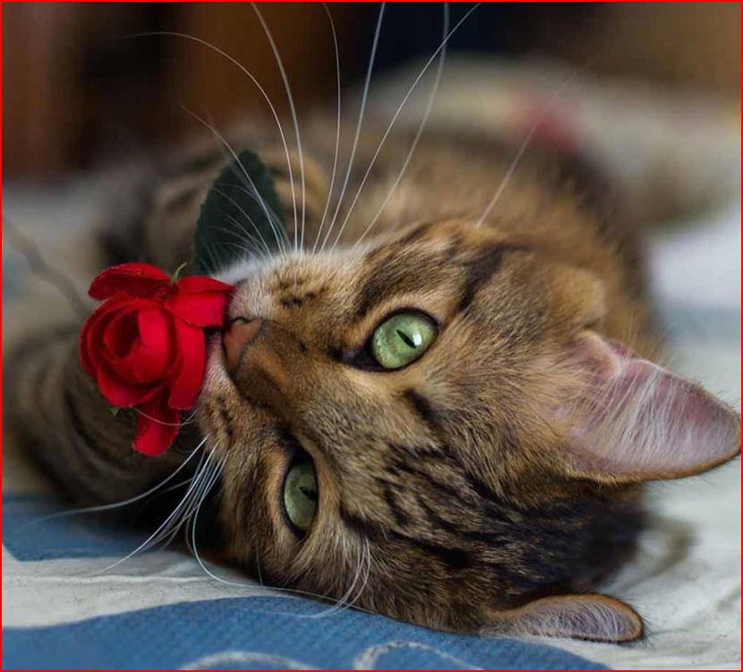 День кошек  (гей блюсик 16167)