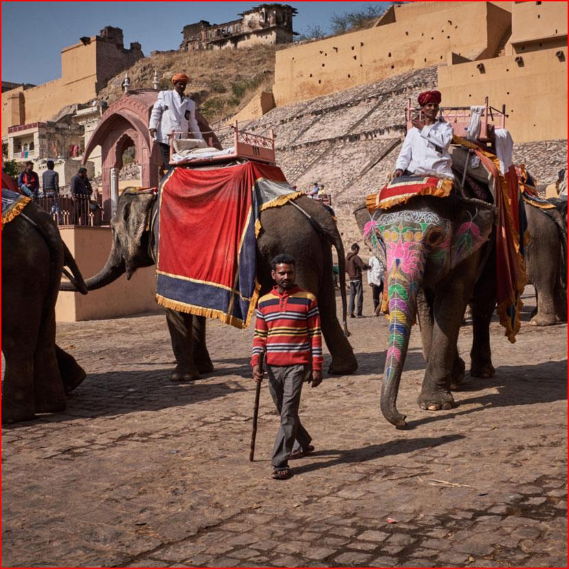 На слонах в форт Амер  (гей блюсик 16199)
