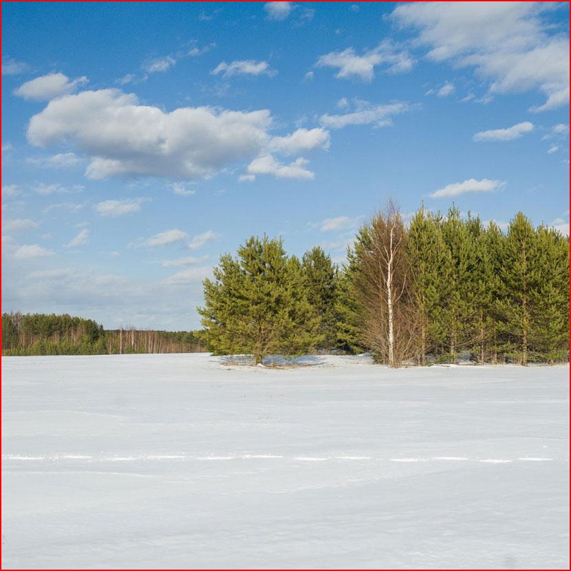 Мартовская прогулка в Вотское  (гей блюсик 16203)