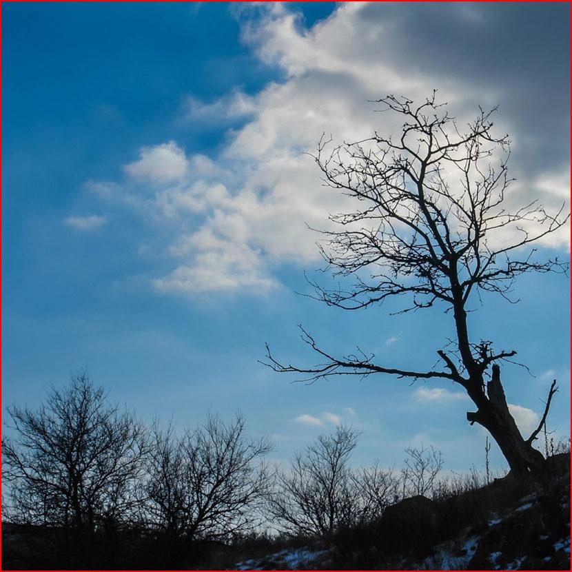 Весенняя фотопрогулка  (гей блюсик 16307)