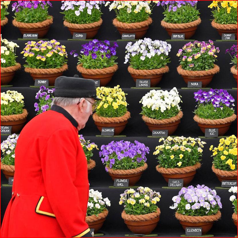 Цветочная выставка The RHS Chelsea Flower Show 2018
