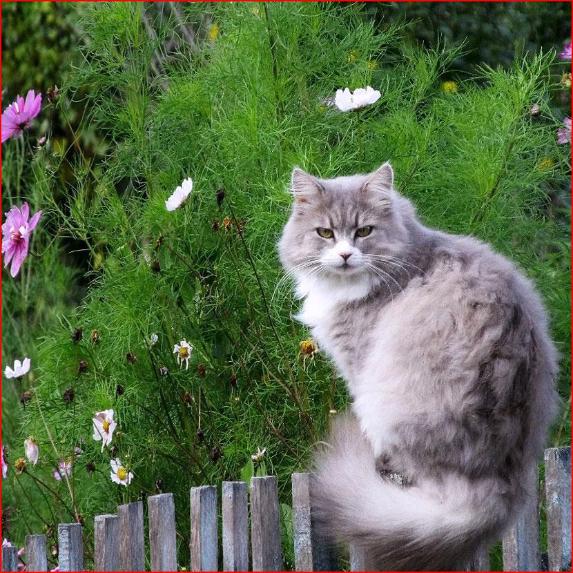 Лето, цветы и кошки. КОТюрморт