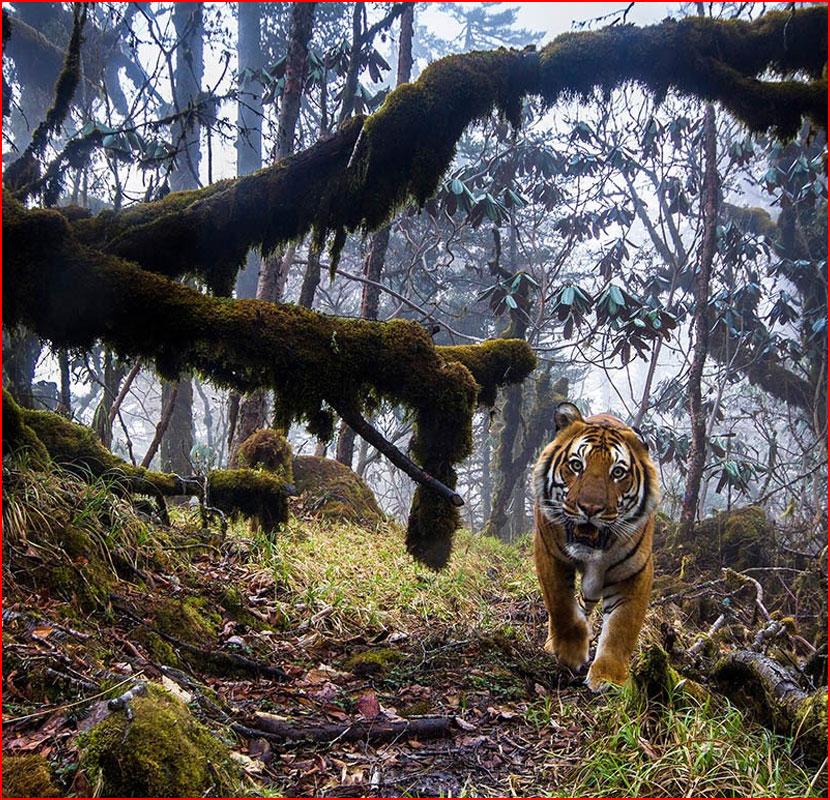 Конкурс дикой фотографии Wildlife Photographer of the Year 2018  (гей блюсик 16947)