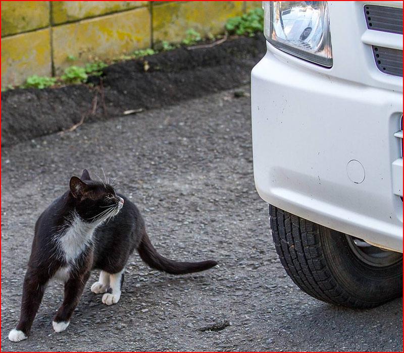 Остров кошек  (гей блюсик 17051)