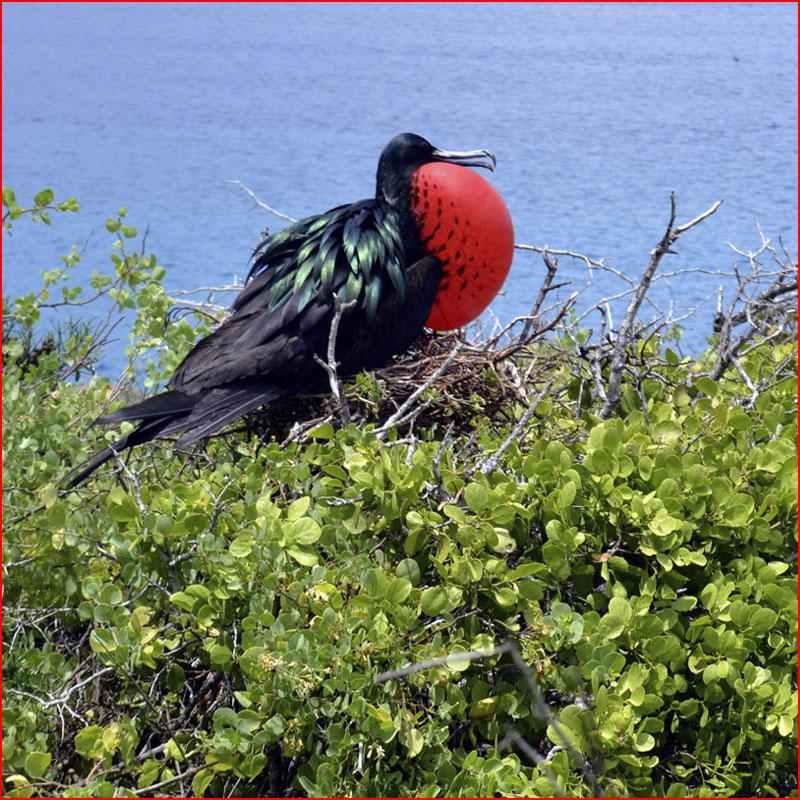 Путешествие на Галапагосские острова  (гей блюсик 17055)