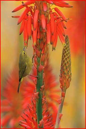 Птицы  (гей блюсик 1747)