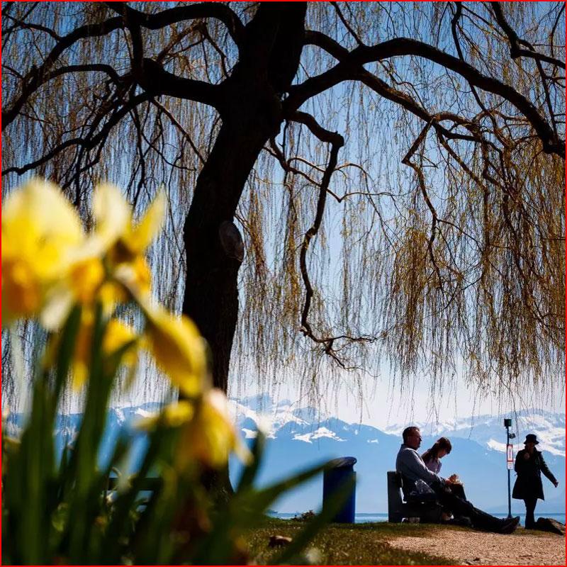 Пришла весна  (гей блюсик 17751)