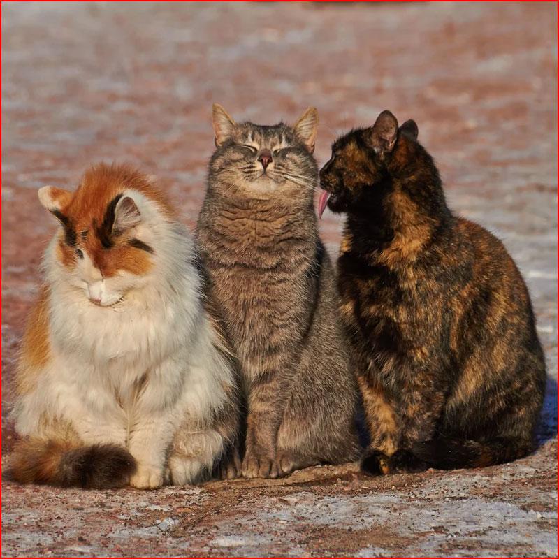 Из жизни животных  (гей блюсик 17871)