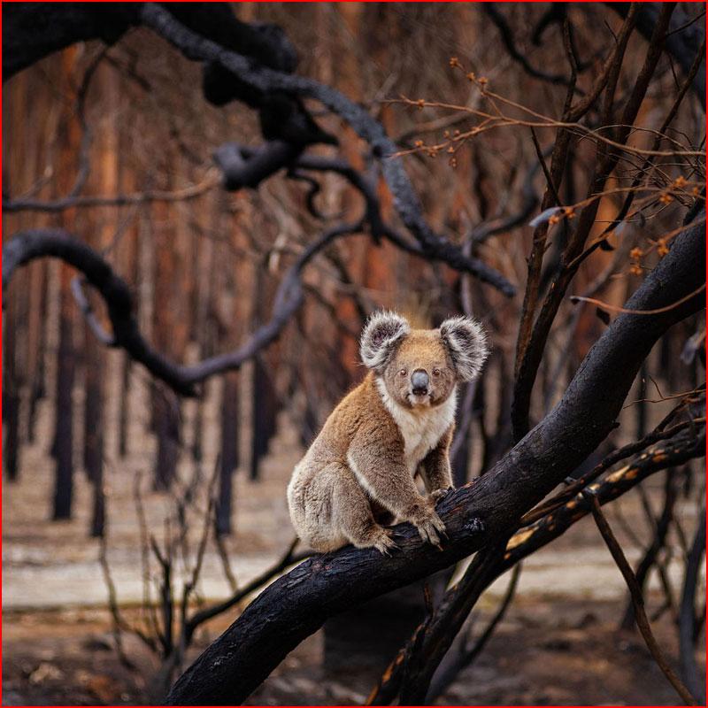 Конкурсные работы BigPicture Natural World Photography 2018  (гей блюсик 17903)
