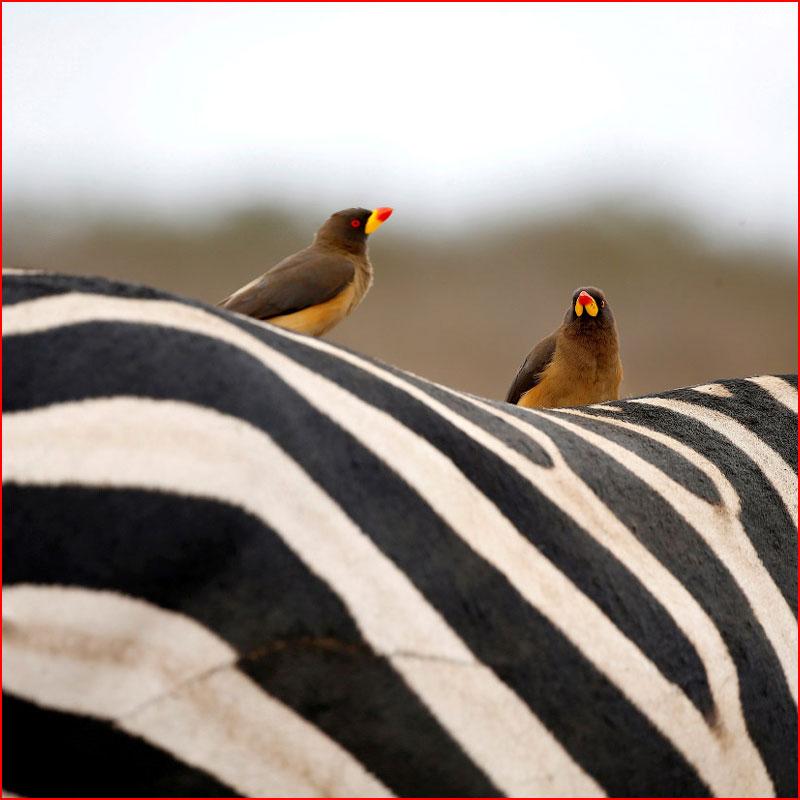 Животные в фотографиях  (гей блюсик 18007)