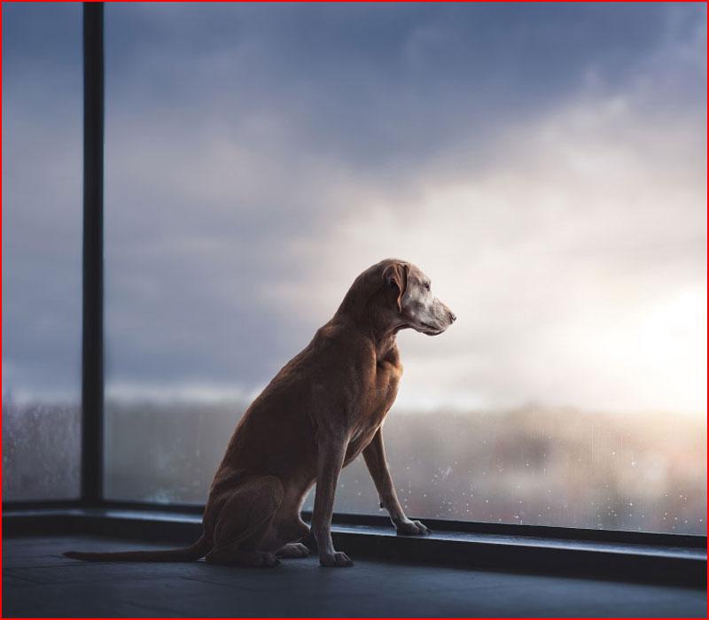 Лучший собачий фотограф 2019  (гей блюсик 18147)