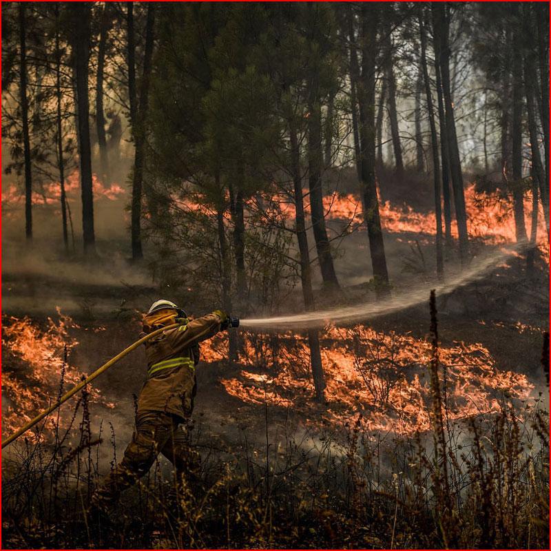 Лесные пожары в Португалии  (гей блюсик 18207)