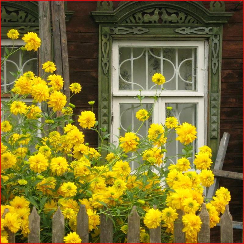 Цветы у дома  (гей блюсик 18247)