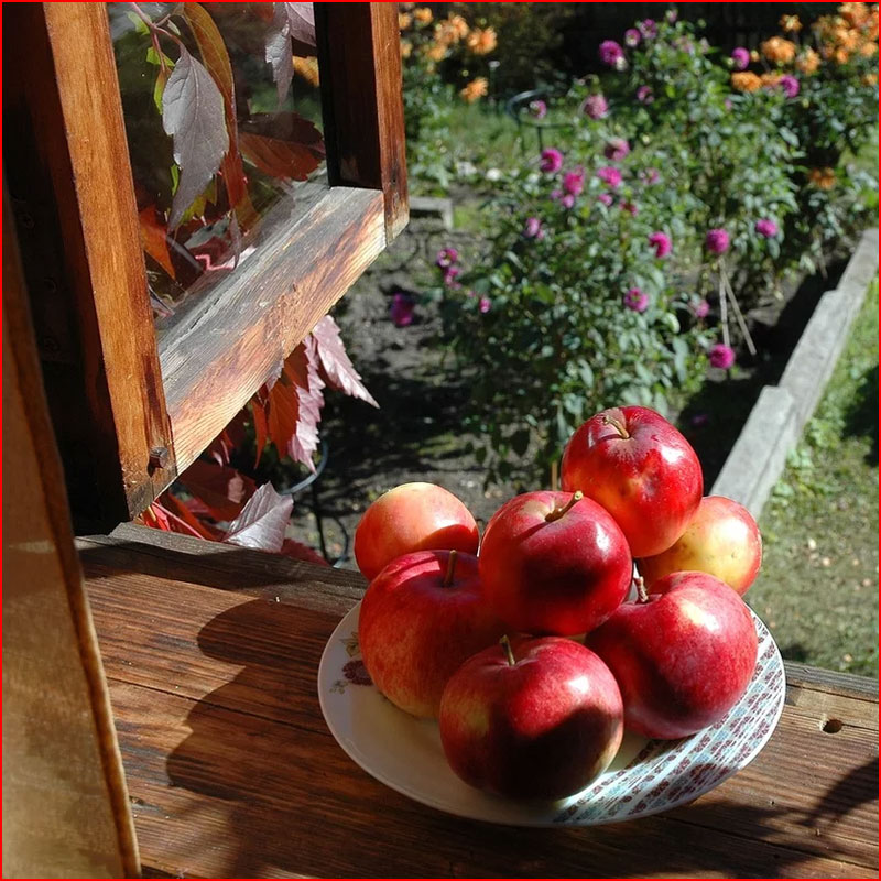 Яблочная пора